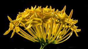 flower-195893_960_720