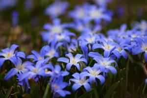 flowers-722095_960_720
